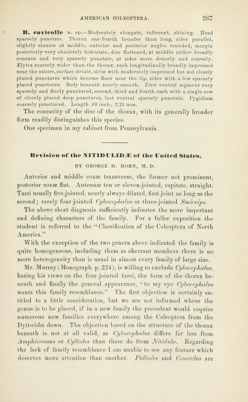 Horn (1879) Trans. Am. Ent. Soc. 7:267-336